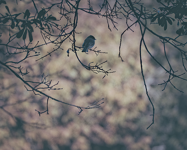 Hiding From The World 20181116 Photograph
