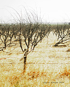 Giving Up - The Drought In California Central Valley Taking It