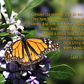 Butterfly With Scripture by Linda Phelps