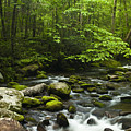 Smoky Mountain Stream by Andrew Soundarajan