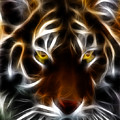 Eye Of The Tiger by Wingsdomain Art and Photography