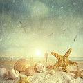 Starfish And Seashells  At The Beach by Sandra Cunningham