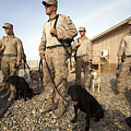 A Group Of Dog-handlers Conduct by Stocktrek Images