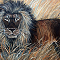 African Lion 2 by Nick Gustafson