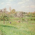 Apple Trees At Gragny by Camille Pissarro