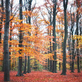 Autumn Whispers I by Artecco Fine Art Photography