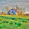 Barn In Field Of Flowers by Geary Barr