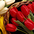 Basket With Tulips by Garry Gay