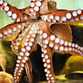 Beautiful Octopus by Marilyn Hunt