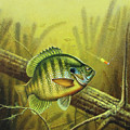 Bluegill And Jig by JQ Licensing