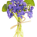 Bouquet Of Violets by Elena Elisseeva