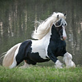 Breathtaking Stallion by Terry Kirkland Cook
