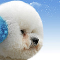 China's Latest Craze - Dyeing Pets by Christine Till