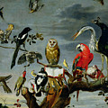 Concert Of Birds by Frans Snijders