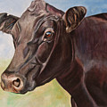 Dolly The Angus Cow by Toni Grote