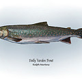 Dolly Varden Trout by Ralph Martens