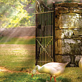 Farm - Geese -  Birds Of A Feather by Mike Savad