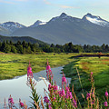 Fireweed Near River. by Dagny Willis