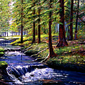 Forest Waters by David Lloyd Glover