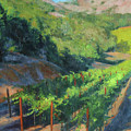 Four Rows Napa Valley by Anna Rose Bain