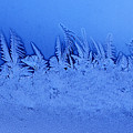Frost Forest by Thomas R Fletcher