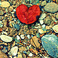 Heart On The Rocks by Susie Weaver