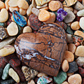 Heart Stone Among River Stones by Garry Gay