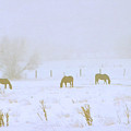 Horses Grazing In A Field Of Snow And Fog by Steve Ohlsen