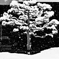 Japanese Tree In The Snow by Dean Harte