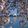 Jefferson Memorial On The Tidal Basin Ds051 by Gerry Gantt