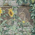 Jesus Looking Through A Lattice With Sunflowers by Tissot