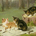 Kittens Playing by Ewald Honnef