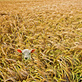 Lamb With Barley by Meirion Matthias