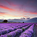 Lavender Field by Evgeni Dinev Photography