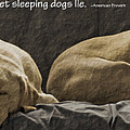 Let Sleeping Dogs Lie by Gwyn Newcombe