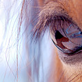 Macro Of Horse Eye by Anne Louise MacDonald of Hug a Horse Farm
