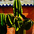 Mexican Style  by Susanne Van Hulst