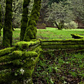 Mossy Fence 2 by Bob Christopher