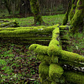 Mossy Fence 4 by Bob Christopher