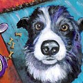 Naughty Border Collie by Dottie Dracos