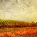 Pumpkins In The Corn Field by Kathy Jennings