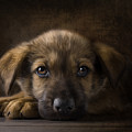 Sad Puppy by Bob Nolin