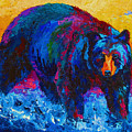 Scouting For Fish - Black Bear by Marion Rose
