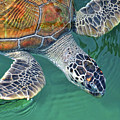 Sea Turtle by Thank you.