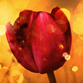 Sparkle Of The Tulip by Cathie Tyler