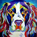 Springer Spaniel - Cassie by Alicia VanNoy Call