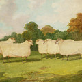 Study Of Sheep In A Landscape   by Richard Whitford