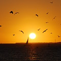 Sunset Birds Key West by Susanne Van Hulst