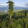 The Largest Patch Of Old Growth Redwood by Michael Nichols