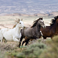Three Mares Running by Carol Walker